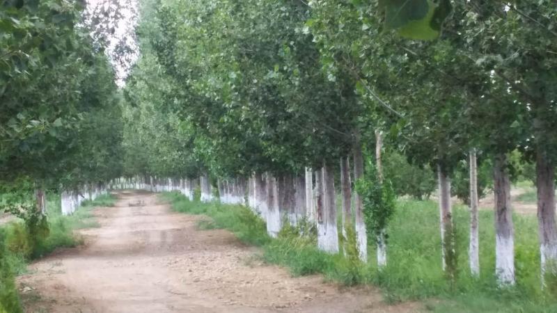 «Ояз» бағында ерекше ағаштар өсірілуде