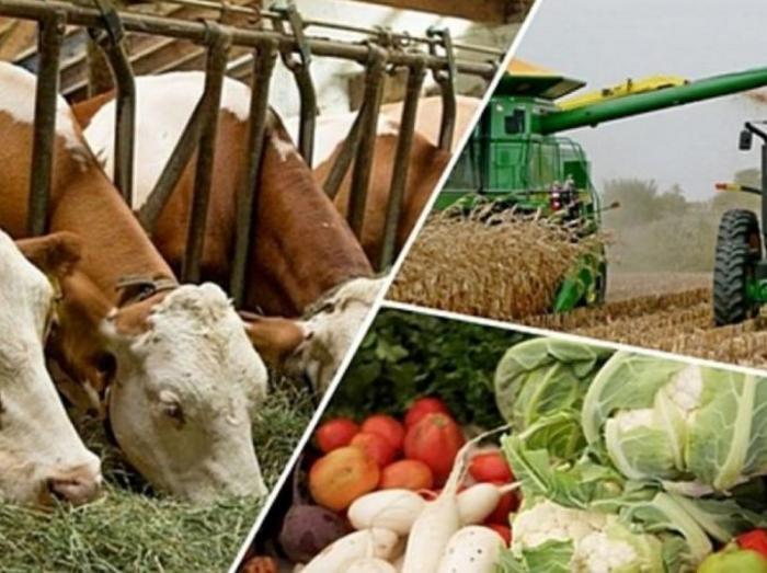 Қызылорда облысы: Агроөнеркәсіптік кешенді дамытудың өңірлік бағдарламасы аясында 148 жоба жүзеге асырылады