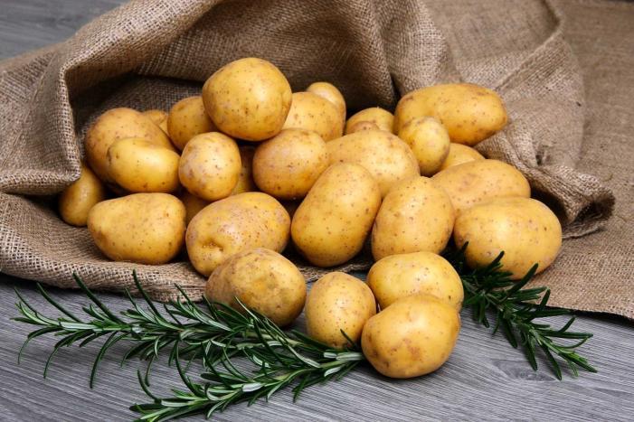 Қызылордада картоп пен асқабақтың жаңа сорттары жерсіндірілді