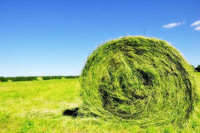 Жалағаштағы «Мақсат» фермерлік қожалығында дала күні өтті