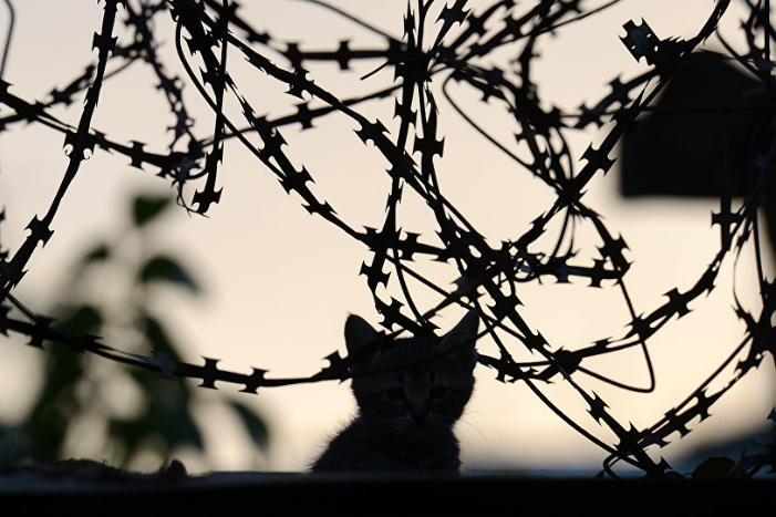 Қызылордада түрмеде отырып терроризмді насихаттағандар сотталды
